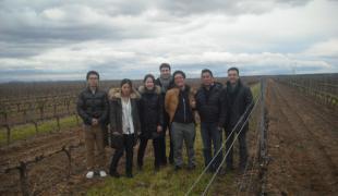 Visitando la viña con un grupo de japoneses.